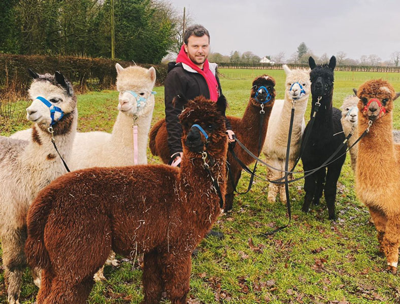 alpaca-husbandry