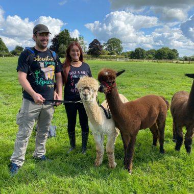 cheshire alpacas experiences (11)