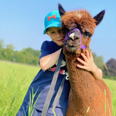 cheshire alpacas experiences (12)