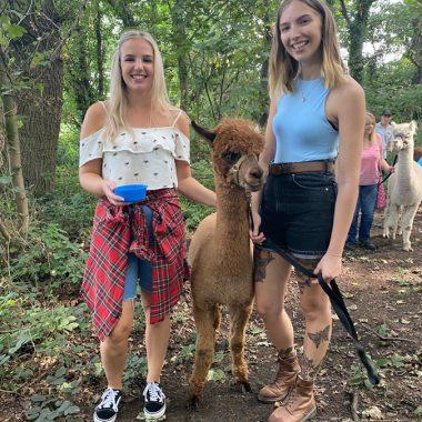 cheshire alpacas experiences (13)