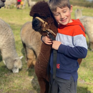 cheshire alpacas experiences (2)