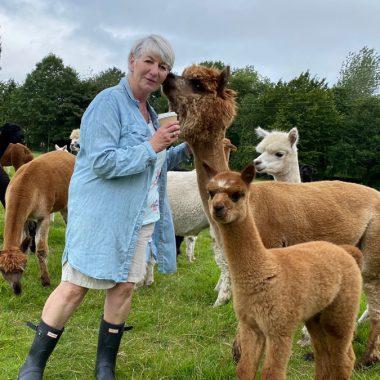 cheshire alpacas experiences (6)