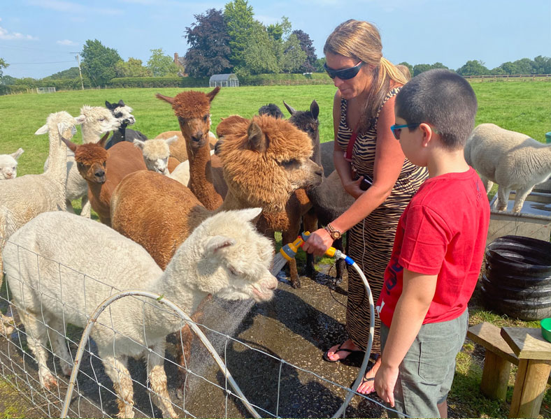 meet-and-greet our alpacas